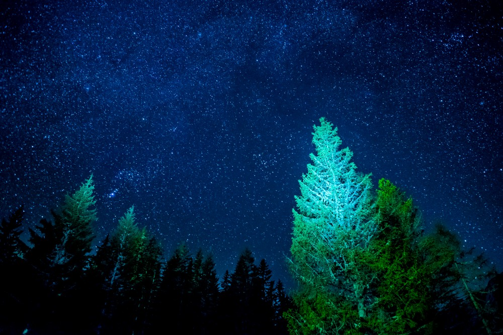 Painting with light: I used a headlamp to get some light on the trees