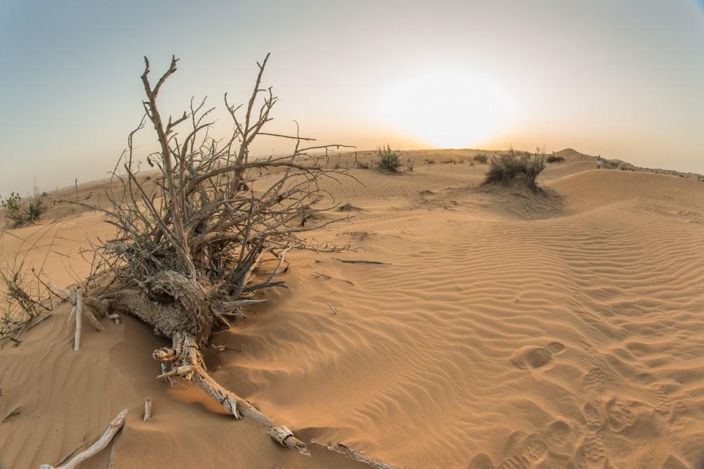 1212_Dubai_Third_246-2
